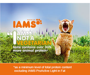 Iams cat advert