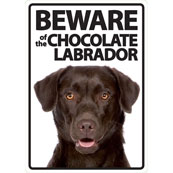 Beware of the Chocolate Labrador