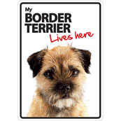 Border Terrier Lives Here