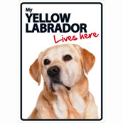 Yellow Labrador Lives Here