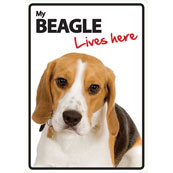 Beagle Lives Here