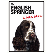 English Springer Lives Here