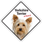 Yorkshire Terrier On Board