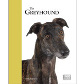 Greyhound by Best of Breed