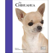 Chihuahua by Best of Breed