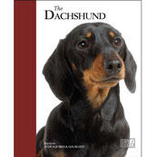 Dachshund by Best of Breed