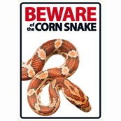 Beware of the Corn Snake