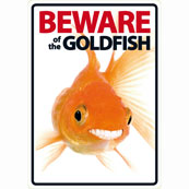 Beware of the Goldfish
