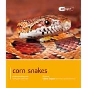 Corn Snake by Pet Expert