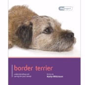 Border Terrier by Dog Expert