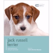 Jack Russell Terrier by Dog Expert