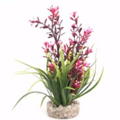 Flowering Aquarium Plant