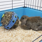Bunny Toy Hay and Snack Dispenser