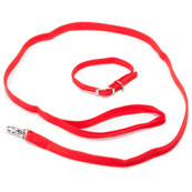 Red Nylon Puppy Collar and Lead Set