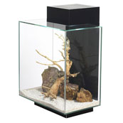Fluval Edge Aquarium 46L in Gloss Black (In Store)