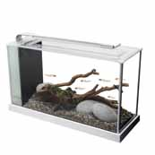 Fluval Spec V White (In Selected Stores)