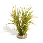 Tropical Grass