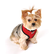 Red Mesh Comfort Harness Large by Pets at Home