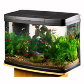 Love Fish Panorama Tank 40 Litre (In Store)