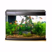 Love Fish Panorama Tank 64 Litre