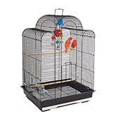 Rainforest Cage San Luis (Online Only)