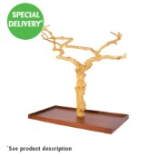Adventure Bound Toys Java II Tree Large (Online Only)