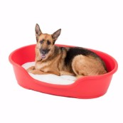 Ruffer and Tuffer Hard Plastic Dog Bed Red