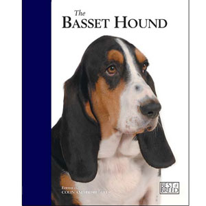 Image for Basset Hound from Pets At Home