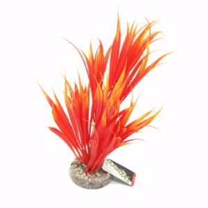 Image for Sword Plant from Pets At Home