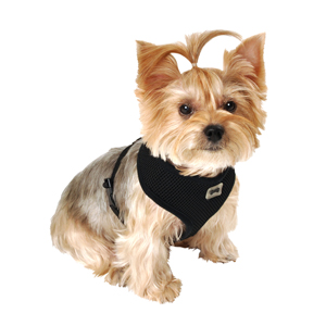 Image for Black Mesh Comfort Harness Medium by Pets at Home from Pets At Home