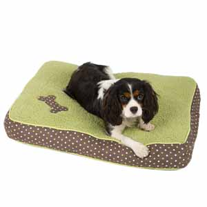 Image for Spotty Mattress in Chocolate/Lime from Pets At Home
