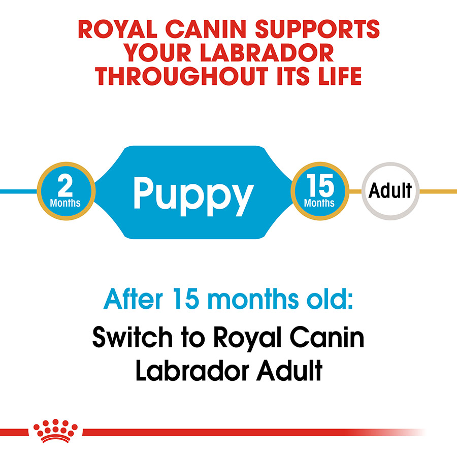 royal canin labrador retriever junior food 12kg pets at home. Black Bedroom Furniture Sets. Home Design Ideas